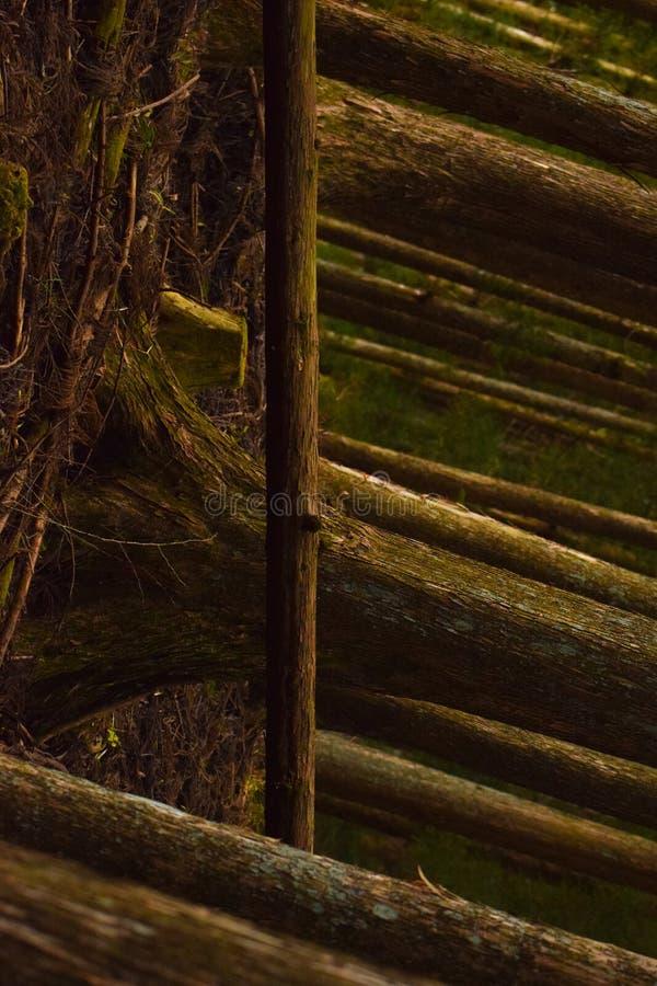 Stupad trädperspektivlutande royaltyfri foto