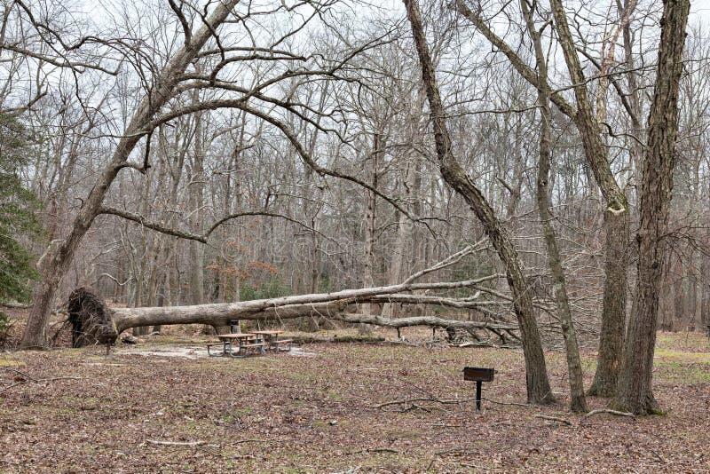 Stupad Tree fotografering för bildbyråer