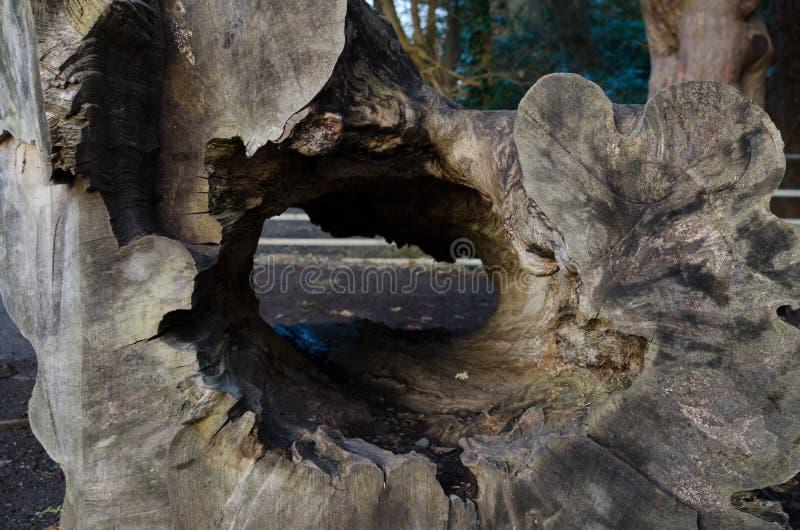Stupad tree i Irland arkivbild