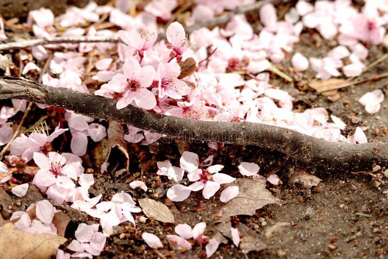 Stupade blomningar på jordningen arkivbild
