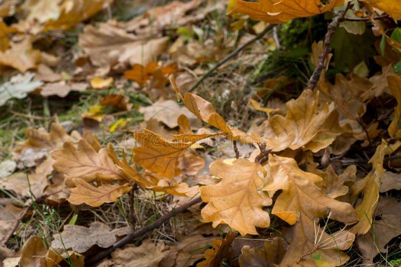 Stupade eksidor i skog royaltyfri foto