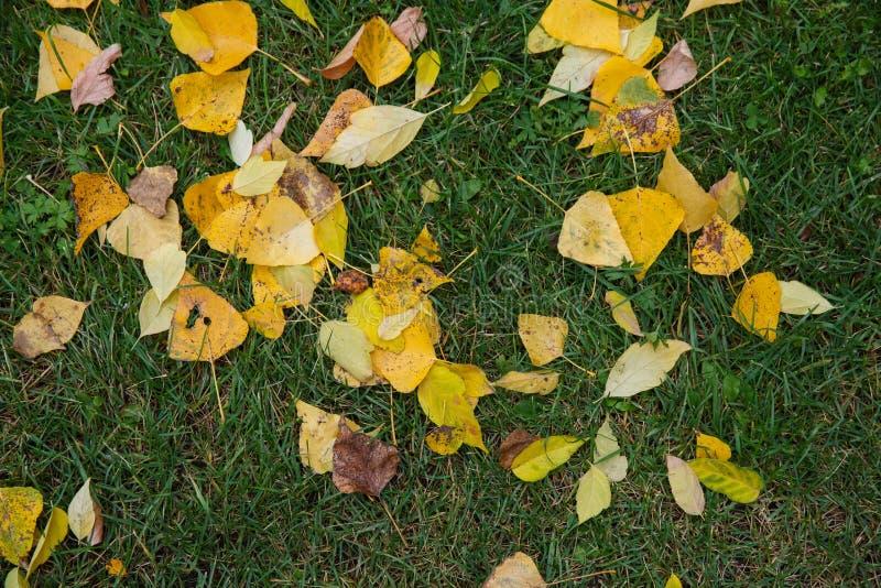 Stupade gulingsidor på grönt gräs i höst royaltyfri foto