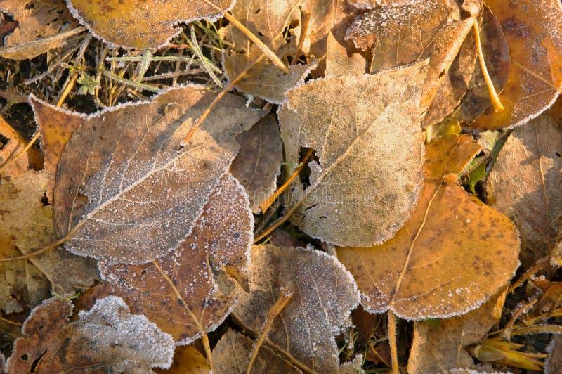 Stupade gulingsidor som täckas med rimfrost arkivfoto