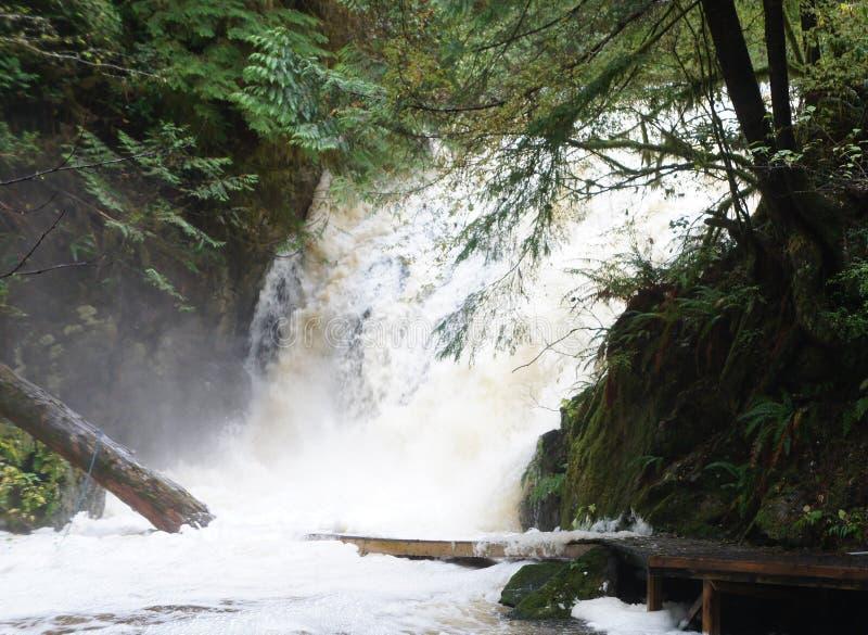 Stupade journaler som doppas delvist av en rasa vattenfall i regnskogen nära Ucluelet, British Columbia arkivfoton