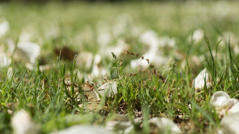 Stupade kronblad och gräs arkivfoto