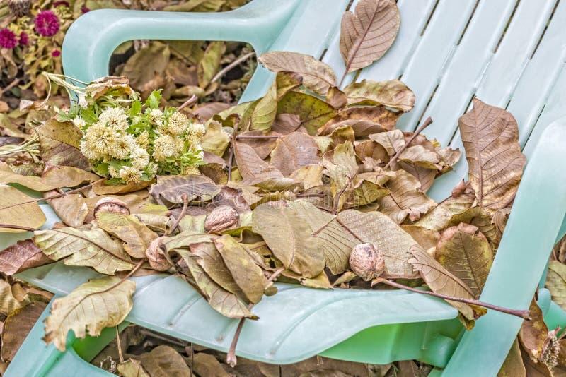 Stupade sidor och valnötter på den trädgårds- dagdrivaren, närbild royaltyfri bild