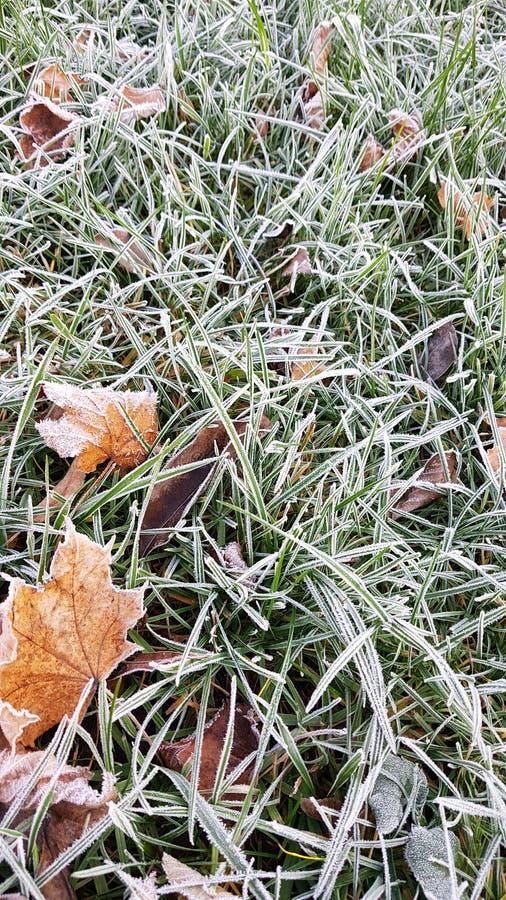 Stupade sidor på grönt gräs med vit frost, abstrakt naturlig bakgrund Djupfryst l?vverk p? jordningen F?rsta frost frysa royaltyfria bilder