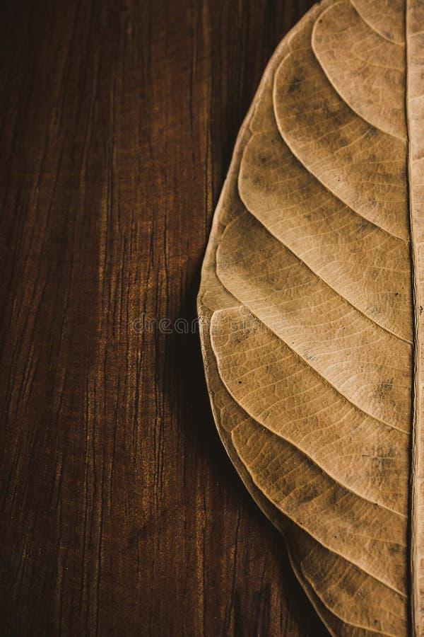 Stupade sidor på träbakgrund arkivbilder