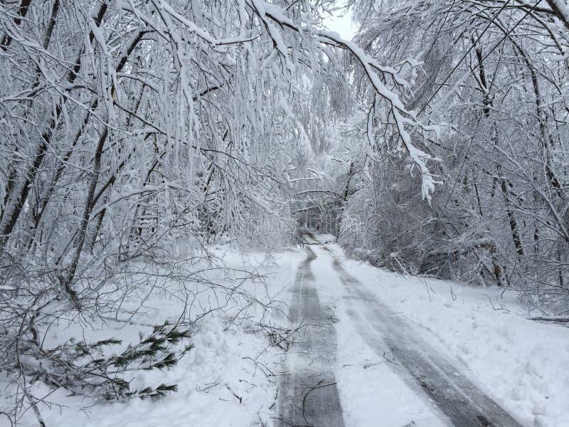 Stupade träd på vägen i vinter stormar Quinn royaltyfri bild