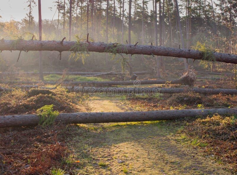 Stupade tr?d i skogen fotografering för bildbyråer