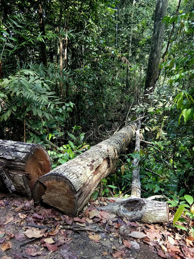 Stupade tr?dstammar i skogen royaltyfria bilder