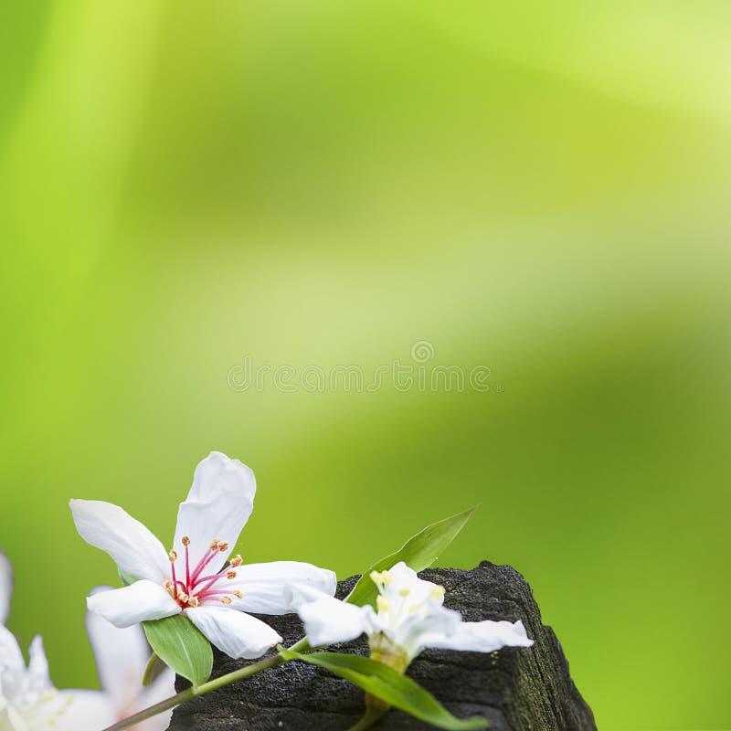 Stupade tung blommor royaltyfri foto