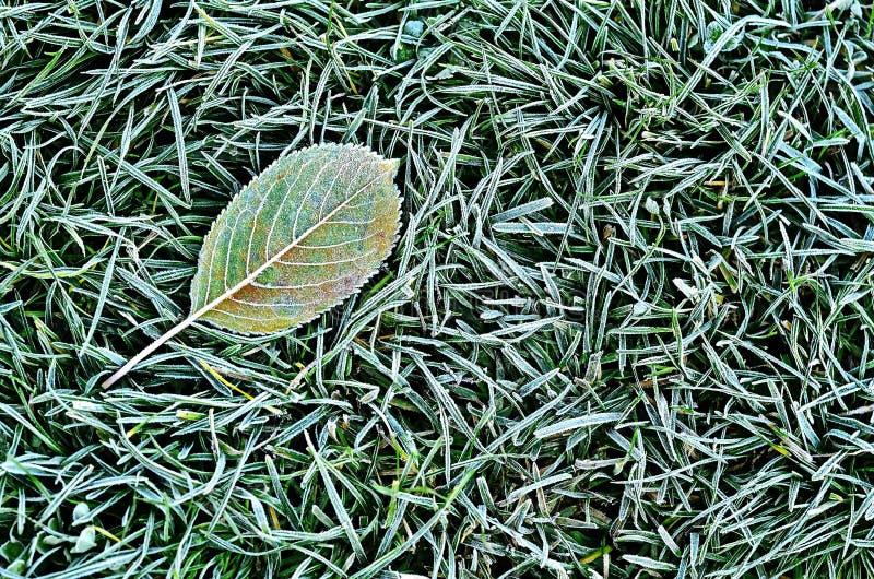 Stupat blad på gräset royaltyfri foto