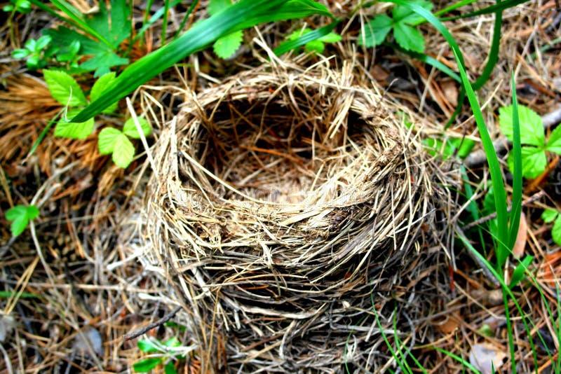 Stupat rede för fåglar och deras fågelungar Övergett fågelhus i träna royaltyfri bild