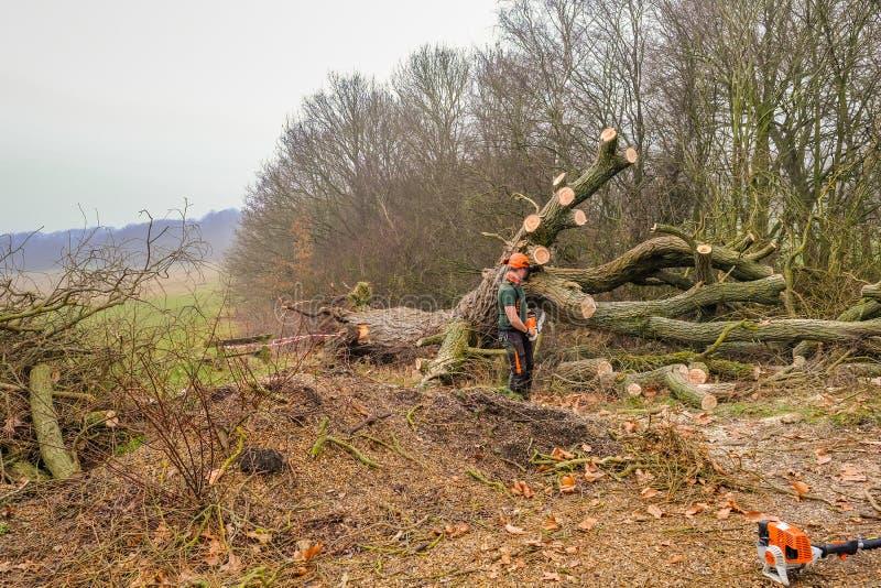 Stupat stort träd i skogen fotografering för bildbyråer