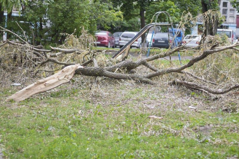 Stupat träd efter ha legat för orkan royaltyfria foton