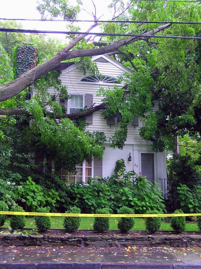 Stupat träd på huset - orkanskada arkivfoto