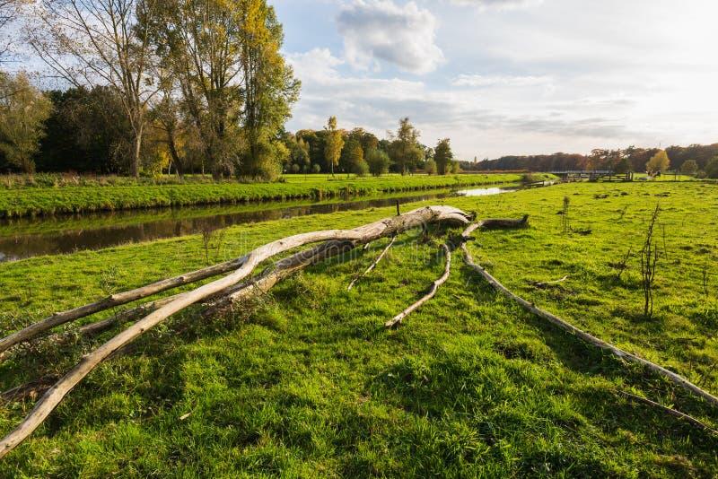 Stupat träd utan skäll i lågt eftermiddagsolljus royaltyfri foto
