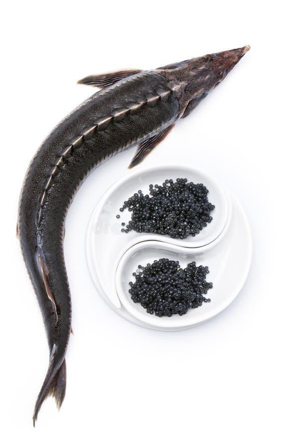 Sturgeon and black caviar royalty free stock image
