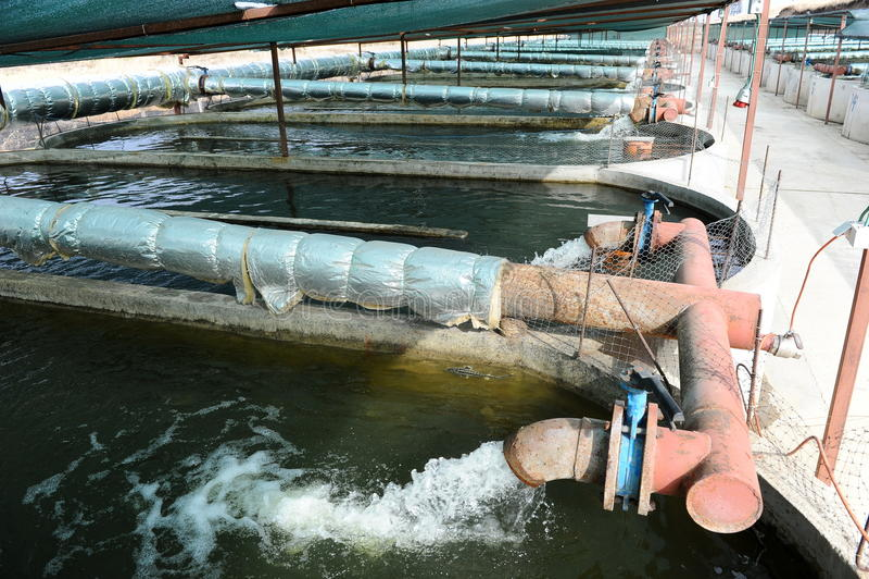 Sturgeon farm. Intensive sturgeon farming - aquaculture system stock photos
