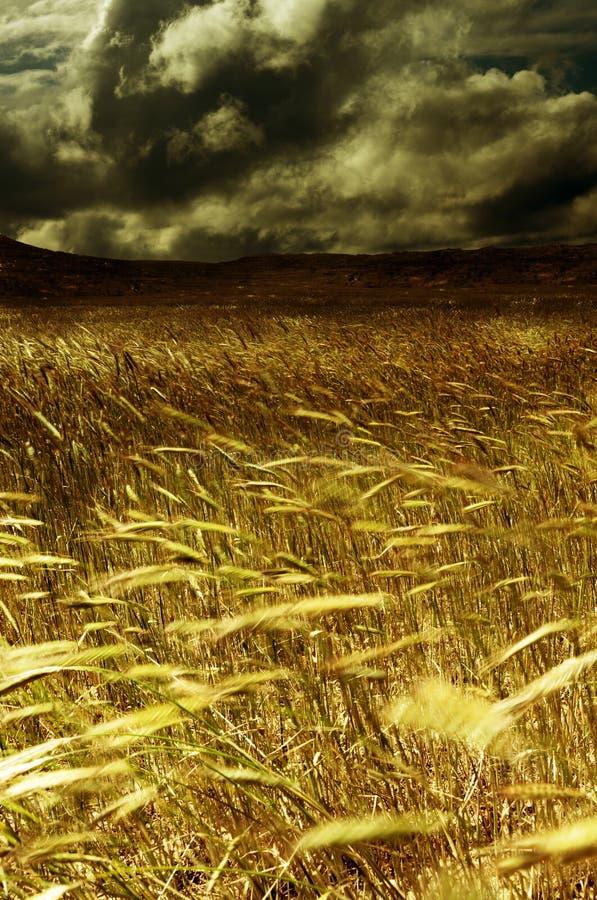 Sturm auf dem Erntegebiet lizenzfreie stockbilder