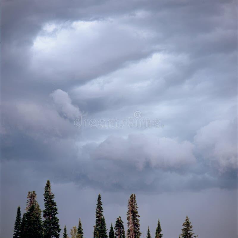Sturmwolken über Rick-` s Becken, Targhee-staatlicher Wald, Wyoming stockfotos