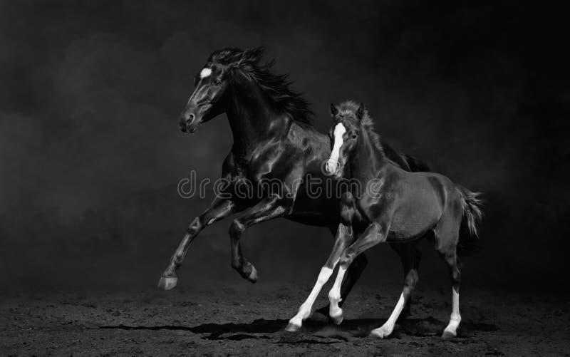 Stute und ihr Fohlen, Schwarzweiss-Foto lizenzfreies stockfoto