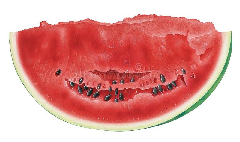 styckvattenmelon royaltyfri illustrationer