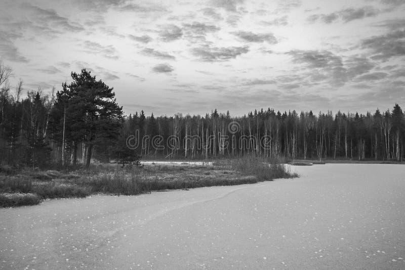 Styczeń 33c krajobrazu Rosji zima ural temperatury przeciw tła błękitny projekta spadać nieba śnieżnej drzew zima Piękno zima Zim fotografia stock
