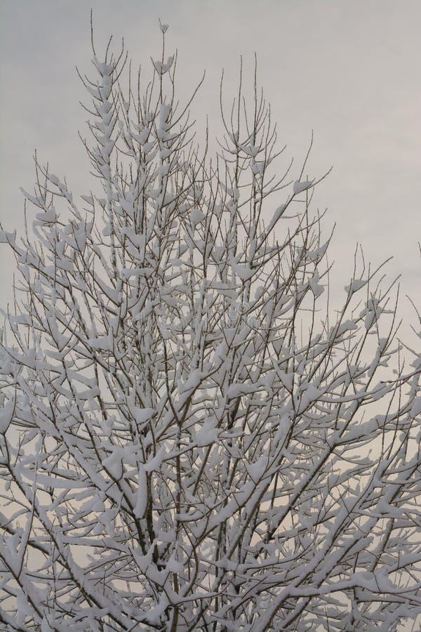 Styczeń 33c krajobrazu Rosji zima ural temperatury chmurny dzień Monochromu krajobraz Zamarznięty las obraz stock