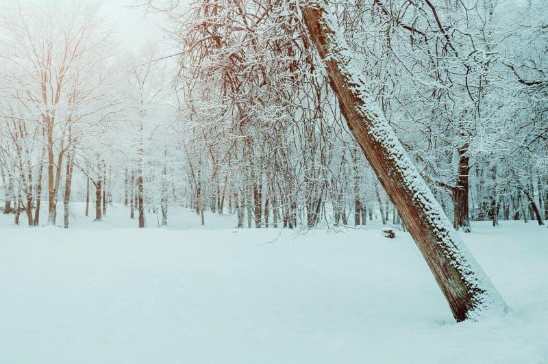 Styczeń 33c krajobrazu Rosji zima ural temperatury Grudzień zimy las z deciduous zimy drzewem zakrywającym z mrozową Śnieżną zimy obraz stock