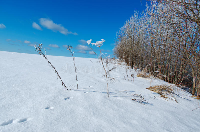 Download Styczeń 33c Krajobrazu Rosji Zima Ural Temperatury Mrożone Drzewa Obraz Stock - Obraz złożonej z drzewa, natura: 53778671
