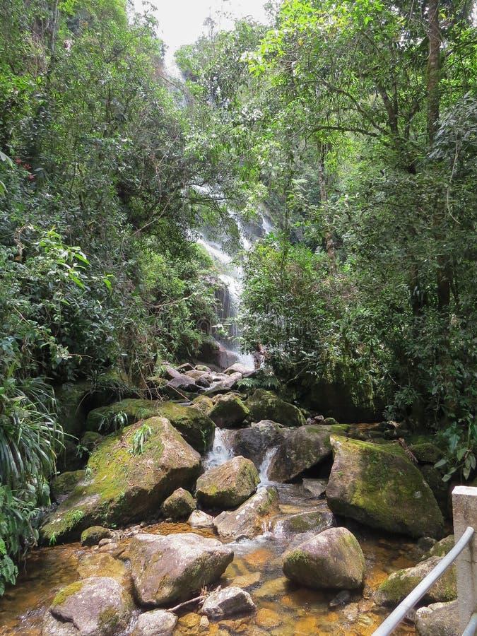 Styczeń 7, 2016, Itatiaia, Rio De Janeiro, Brazylia, gwałtowni w Itatiaia parku narodowym obrazy stock