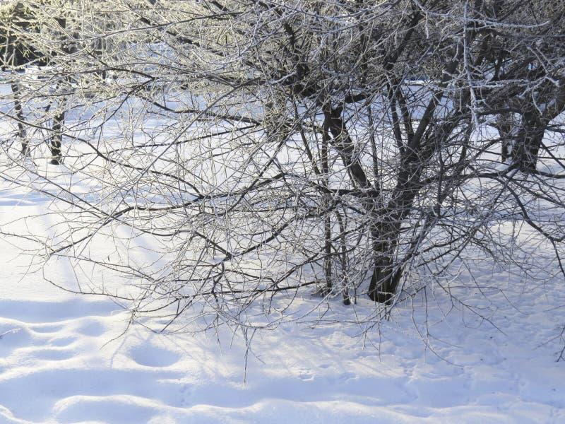 Stycze? 33c krajobrazu Rosji zima ural temperatury obraz royalty free