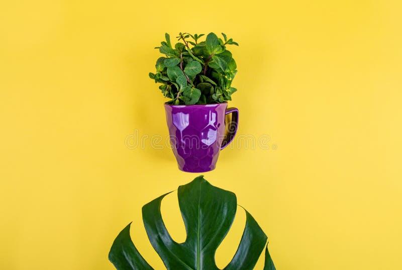 Style étendu plat de fruits et légumes image libre de droits