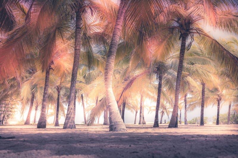Style artistique de cru de fond coloré d'île de lumière du soleil de sable de palmiers de plage images stock