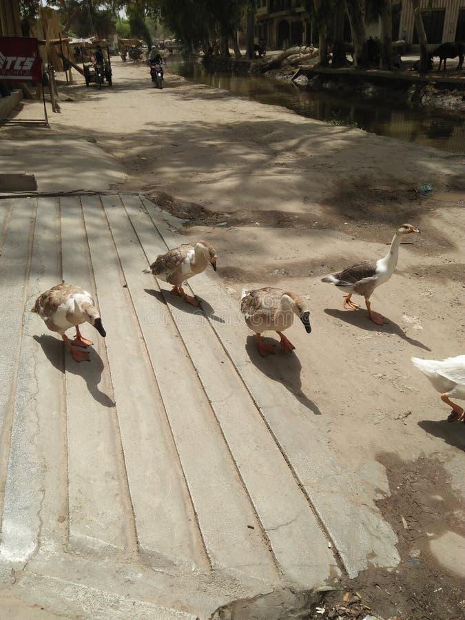 Style de vie d'oiseaux photo stock