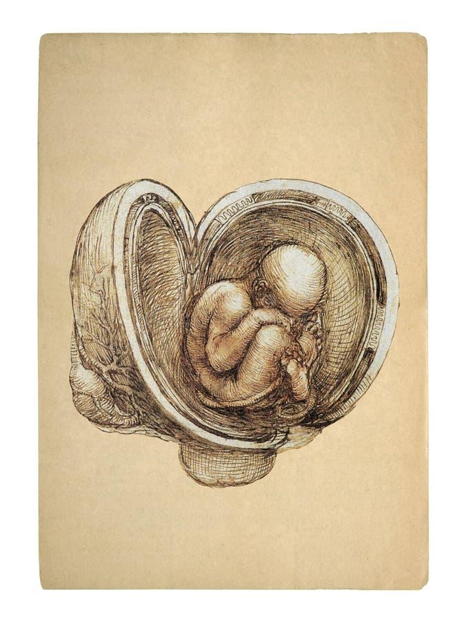 Style fetus royalty free stock photography