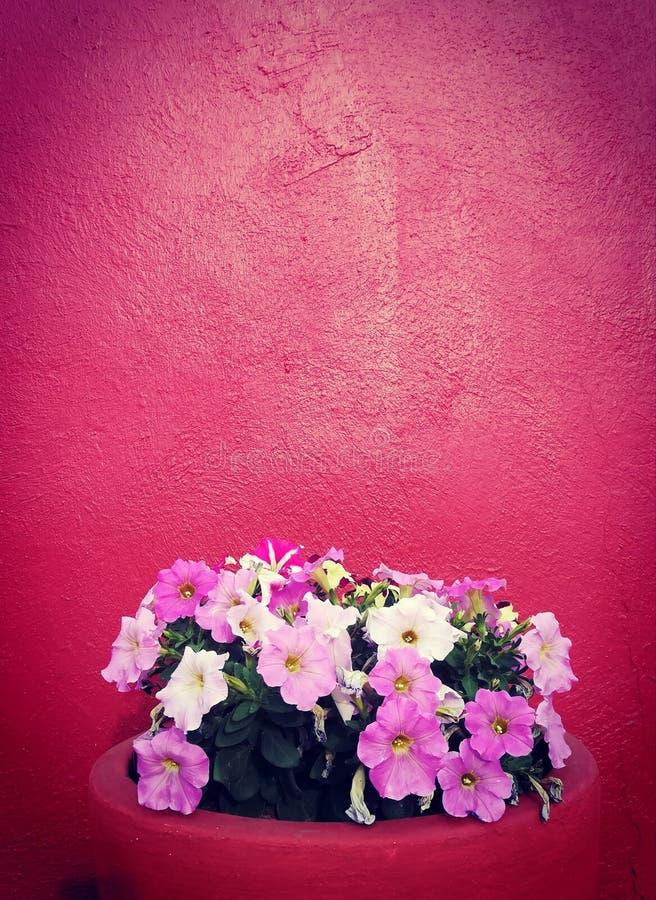 Style mexicain images libres de droits