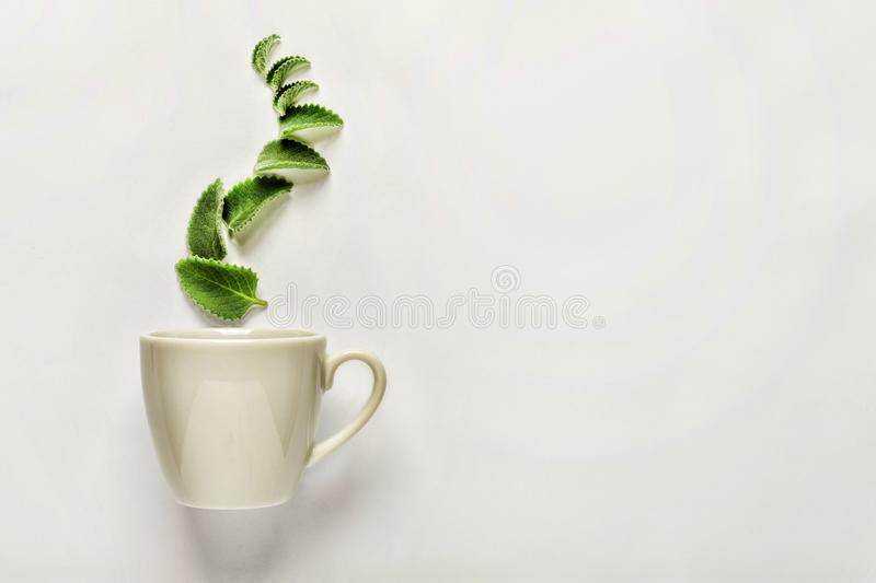 Style minimalism. A cup of fresh green tea or herbal tea with green mint leaves, above, the concept of the aromatic qualities of t royalty free stock photo
