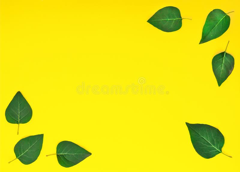 Style minimalism. Green leaves on a yellow background. royalty free stock image
