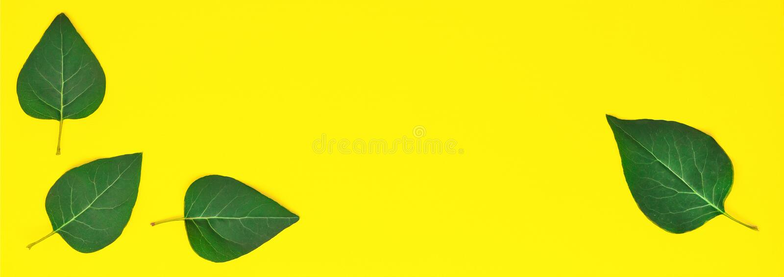Style minimalism. Green leaves on a yellow background. stock images