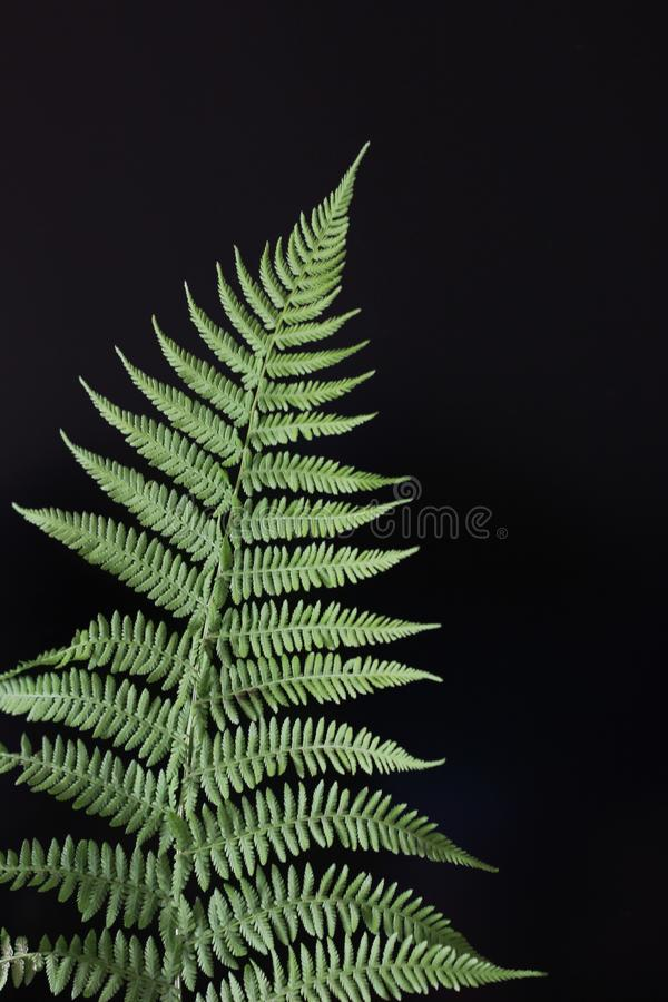 Style nature fern branch on a black background stock image