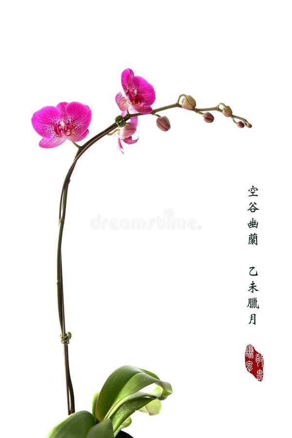 Style Orchidée-chinois de peinture images stock