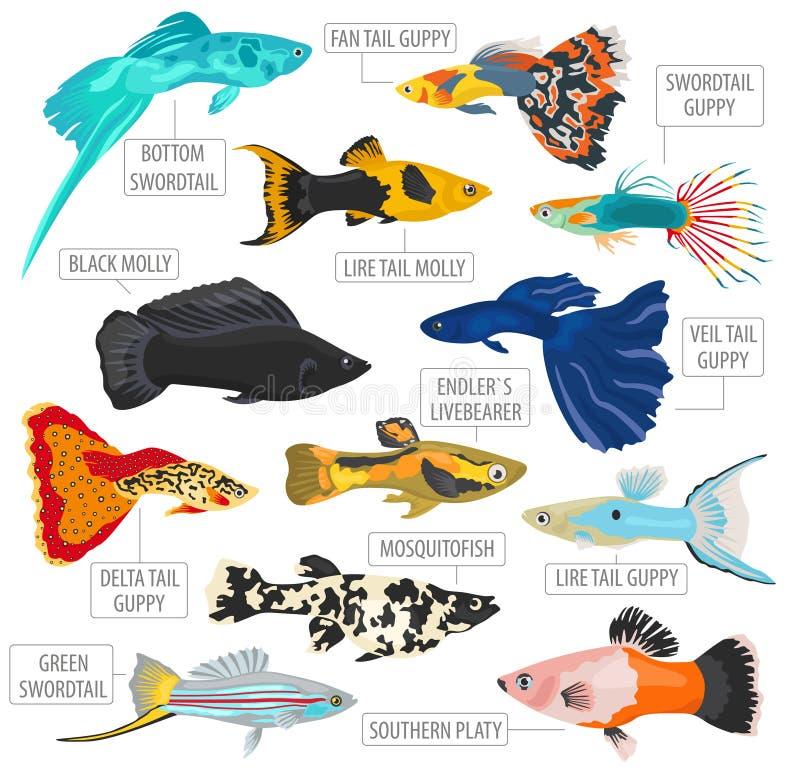 Style plat réglé d'icône de races de poissons d'eau douce d'isolement sur le blanc illustration de vecteur