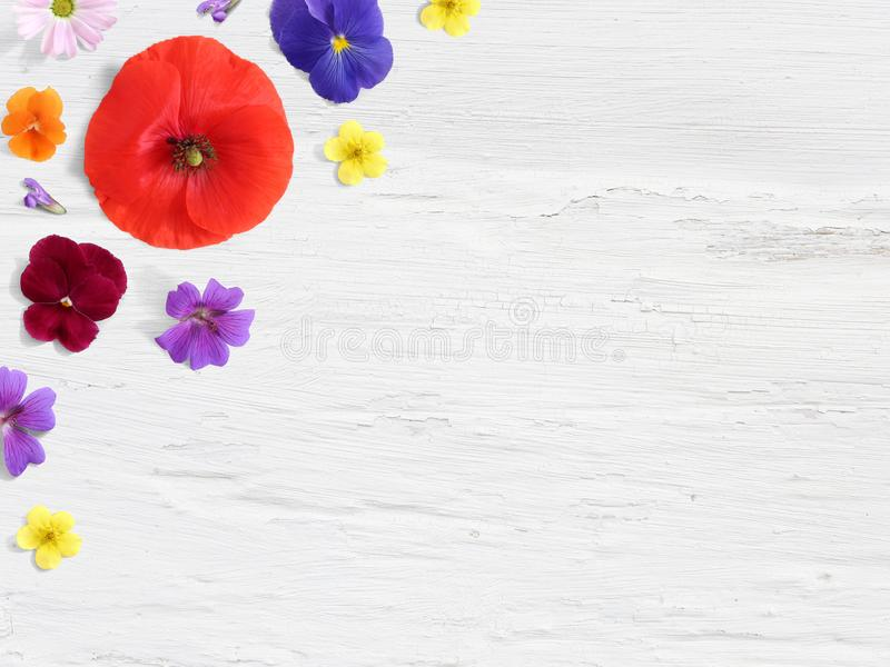 Styled stock photo. Feminine desktop floral composition with wild and edible garden flower. Poppy, pansy geranium and royalty free stock image
