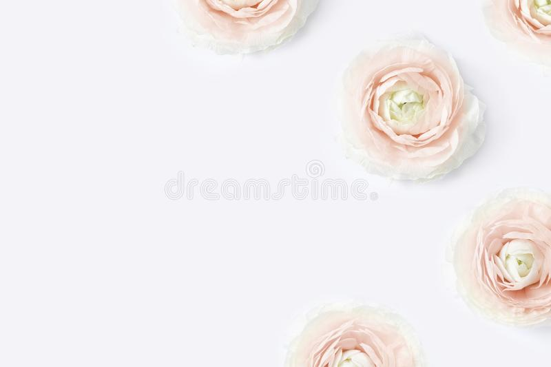 Styled stock photo. Feminine desktop mockup with blush pink buttercup flowers, Ranunculus, on white table background royalty free stock image