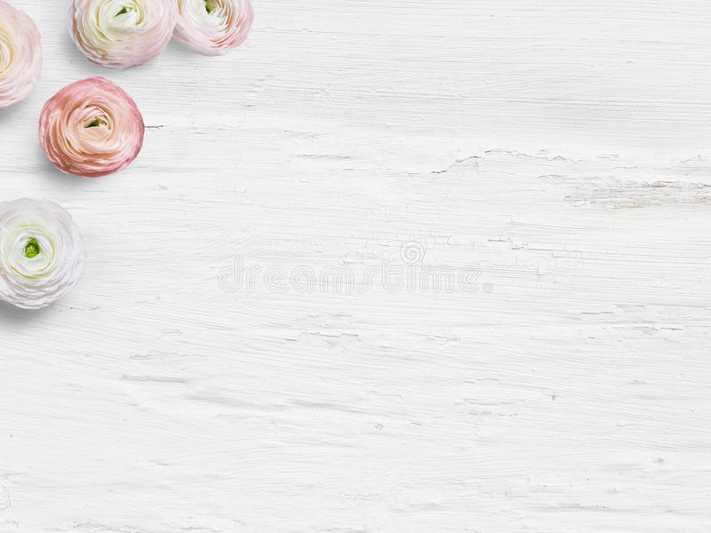 Styled stock photo. Feminine desktop mockup with buttercup flowers, Ranunculus, empty space and shabby white background. Top view, picture for blog or social stock photography