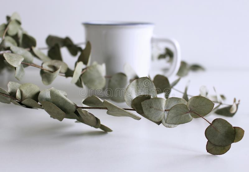 Styled stock photo.Feminine desktop mockup scene with green eucalyptus leaves and blurred white mug on white background royalty free stock image