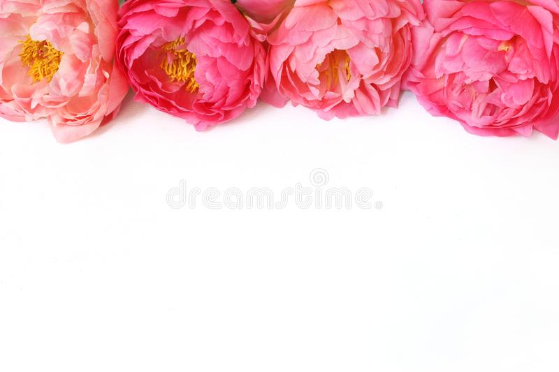 Styled stock photo. Feminine floral frame composition. Decorative web banner made of beautiful pink peonies. White. Background. Empty space, flat lay, top view stock photo